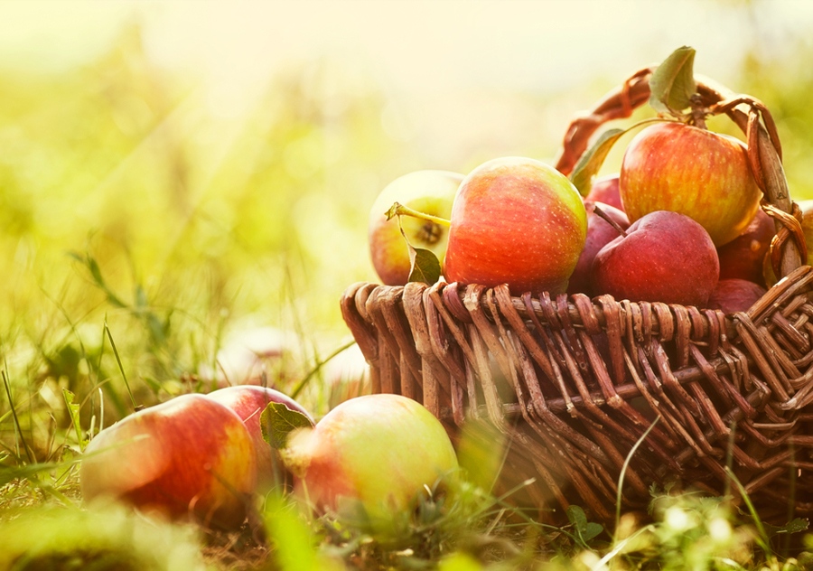Charlie's Apple Feast Saturday 2nd September 2017